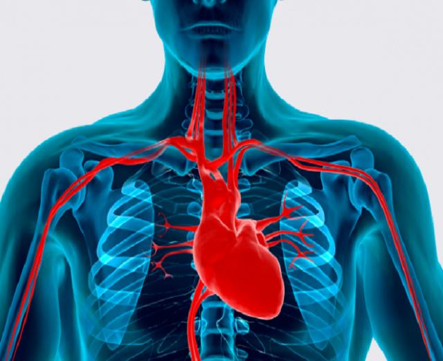 Сердце и сердечно-сосудистые заболевания
